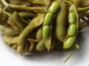 Kacang Kedelai Rebus