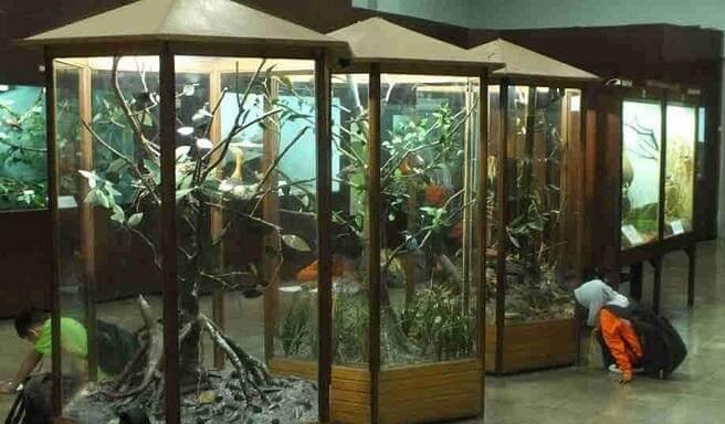 Wisata Museum Zoologi Bogor